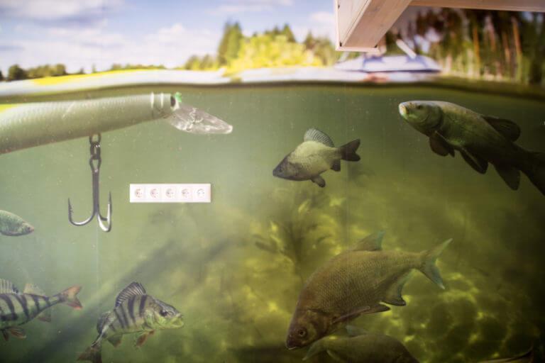 loodusmaja-kalatapeet